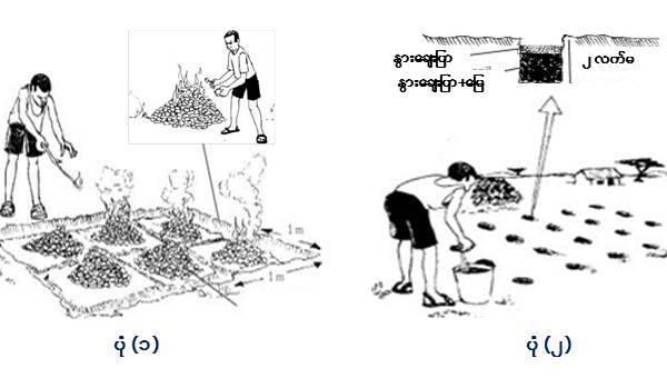 နွားချေးပြာအား မြေသြဇာအဖြစ် အသုံးပြုခြင်း