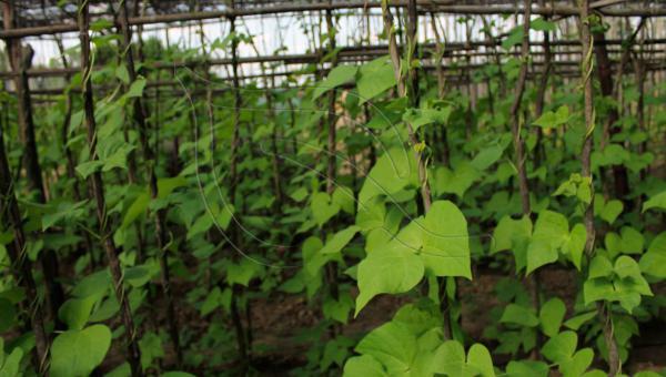 မဂ္ဂနီဆီယမ်ကို သီးနှံပင်များ စုပ်ယူစားသုံခြင်း၊ မြေဆီလွှာမှ ဆုံးပါးခြင်း နှင့် မဂ္ဂနီဆီယမ် ဓာတ်ပေါင်းများ၊ မြေသြဇာများ