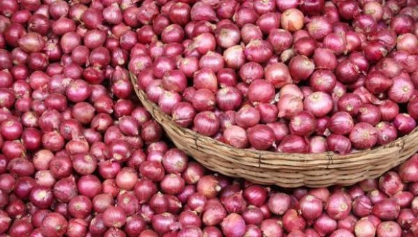 ကြက်သွန်နီ စိုက်ပျိုးနည်း