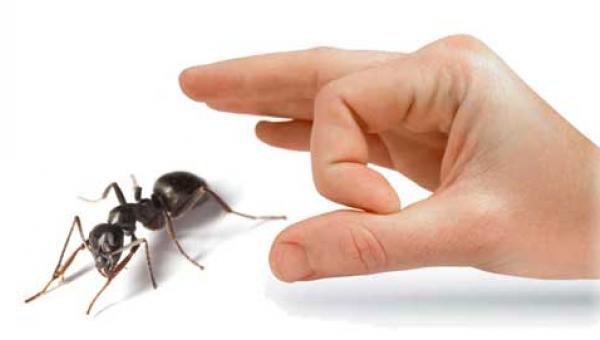ပုရွက်ဆိတ် ကာကွယ်ရေး