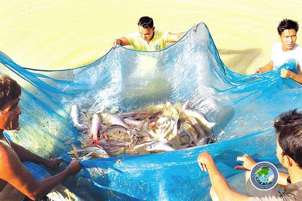 မြန်မာ့မွေးမြူရေးငါးများ ယခုနှစ် ဒီဇင်ဘာ ၁ ရက်မှစ၍ အီးယူသို့ တင်ပို့ခွင့်ရရှိပြီ