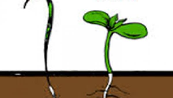 စိုက်ပျိုးရေးကကြီးခခွေး ၁
