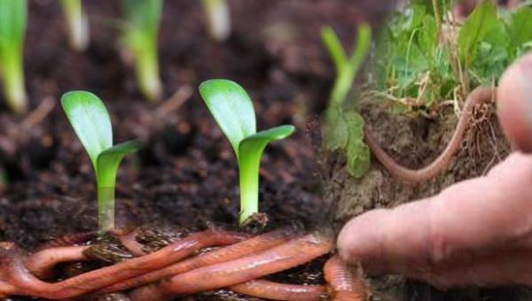 မေးခွန်းတွေမေးကြမယ်။ဖြေကြမယ်။ (အော်ဂဲနစ် စိုက်ပျိုးရေးကို ဘာလို့ ကြိုက်ကြတာလဲ)