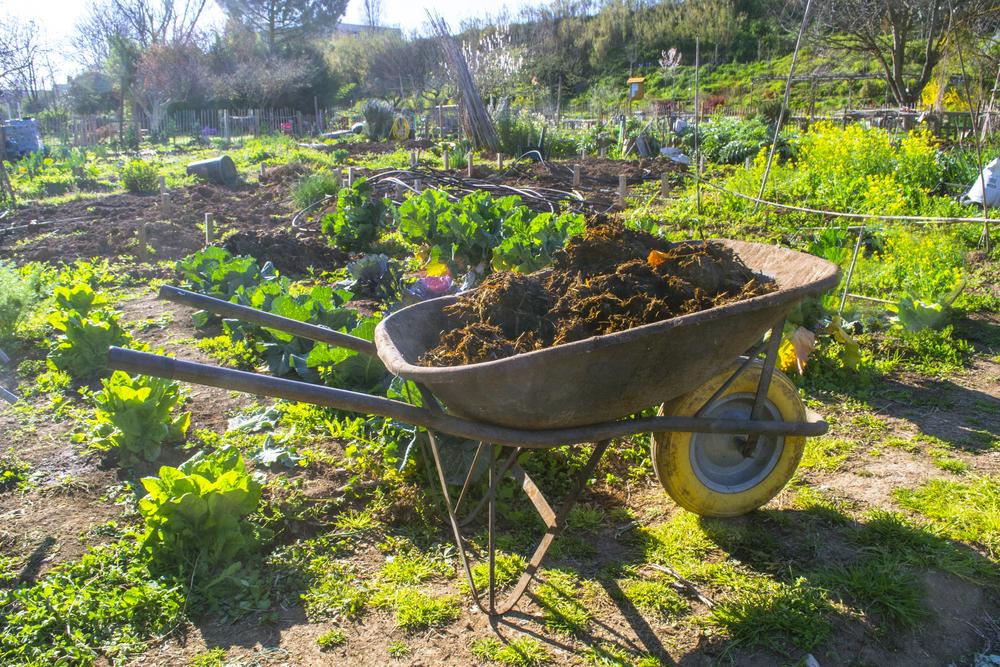 အော်ဂဲနစ်စိုက်ပျိုးရေးအတွက် သဘာဝမြေဆွေး (organic manures)ရဲ့အရေးပါမှုများ