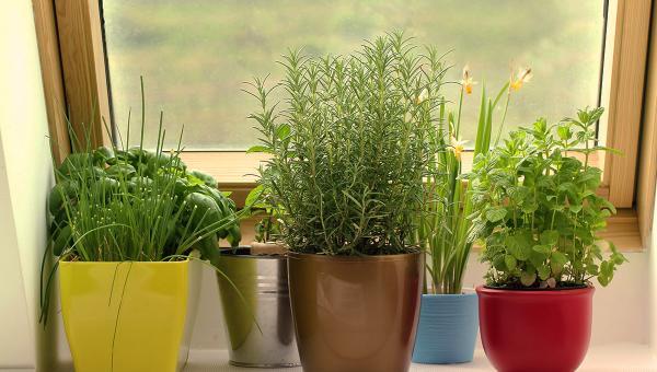 စိတ်ကူးထဲက အိမ်တွင်း ဥယျာဉ်လေးတစ်ခုကို လက်တွေ့ဖန်တီးကြမယ်