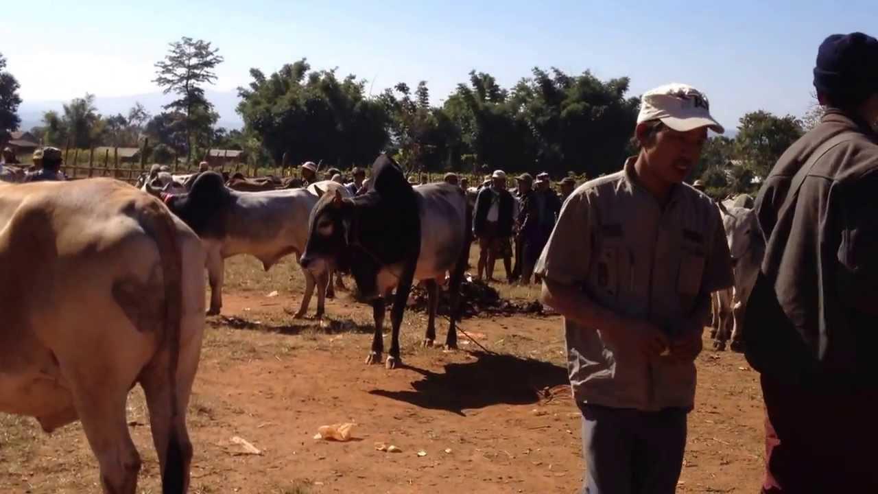 တရုတ်သို့ လယ်ယာ ထွက်ကုန်နှင့် ကျွဲ၊ နွားများ တရားဝင် ပို့ရန် လက်မှတ်ထိုးမည်