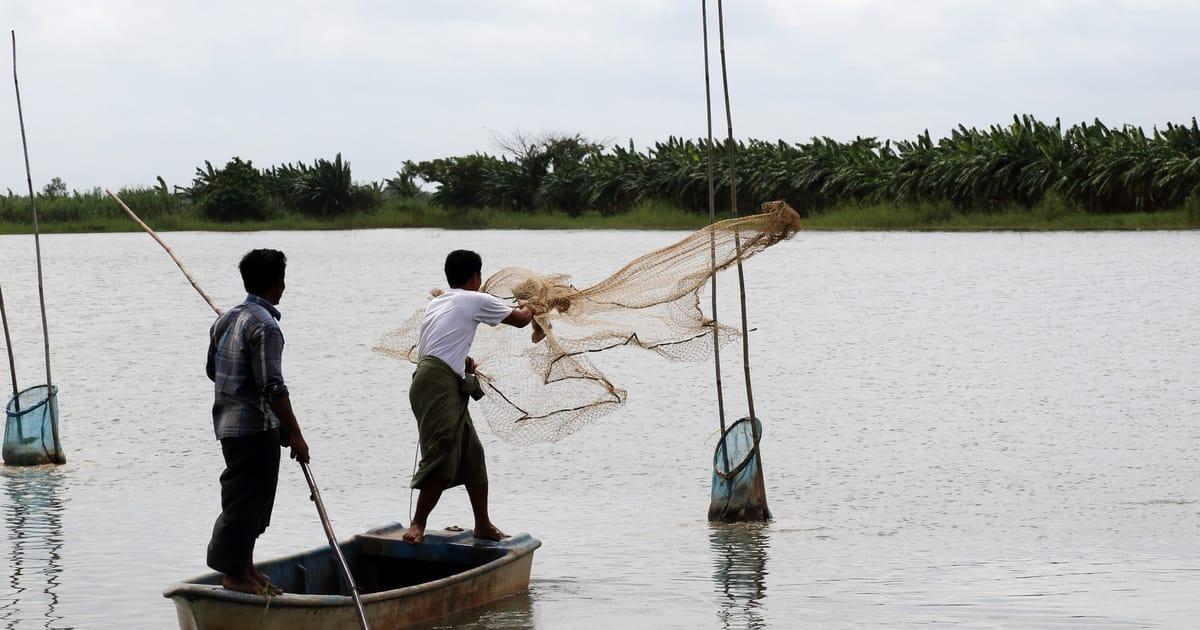 ငါးမွေးမြူခြင်းဆိုင်ရာဥပဒေကို အမျိုးသားငါးမွေးမြူ ခြင်း ဖွံ့ဖြိုးတိုးတက်မှုဆိုင်ရာဥပဒေအဖြစ် ပြောင်းလဲသတ်မှတ်ရန် လွှတ်တော်သို့ တင်ပြမည်