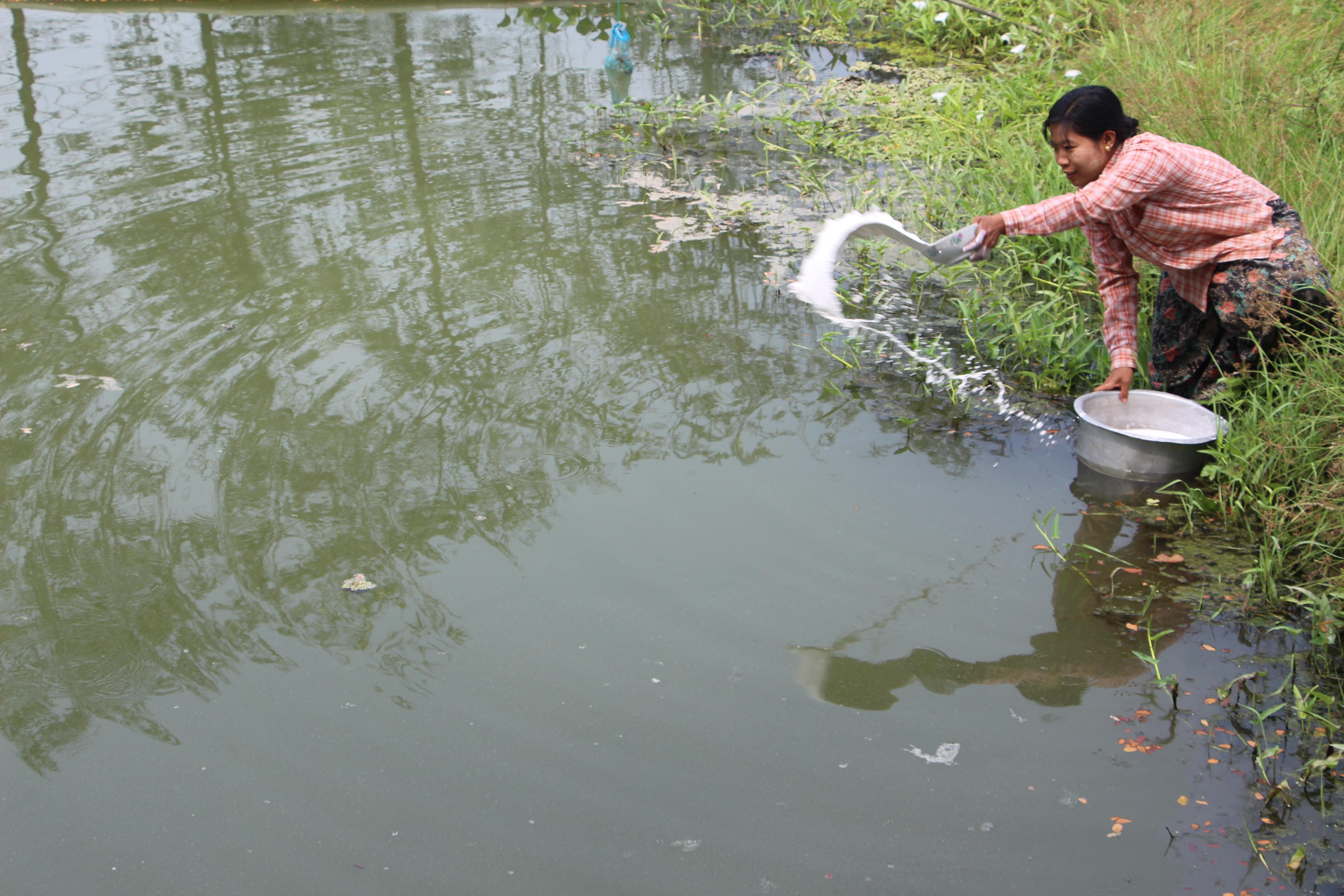 ကန်အတွင်း မြေဩဇာထည့်သွင်းခြင်းနှင့် ရေအရည်အသွေးစစ်ဆေးခြင်း