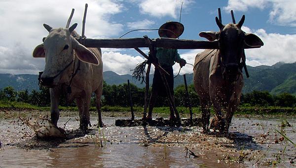 တောင်သူလယ်သမားကြီးများအတွက် နှိုးဆော်ချက် (ဇွန်လ)