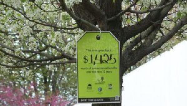 သစ်ပင်ရဲ့ အကျိုးကျေးဇူး (၁၀) ချက်