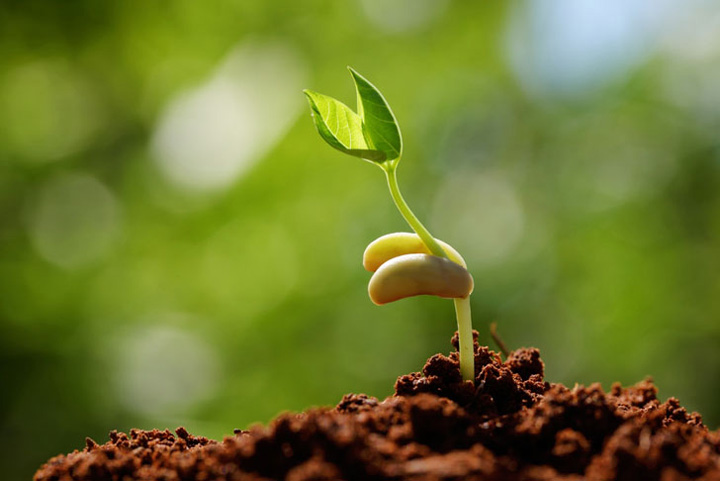 စိုက်ပျိုးရေး နည်းပညာကို ခြင်းကြားဖြင့် ခံယူခြင်း