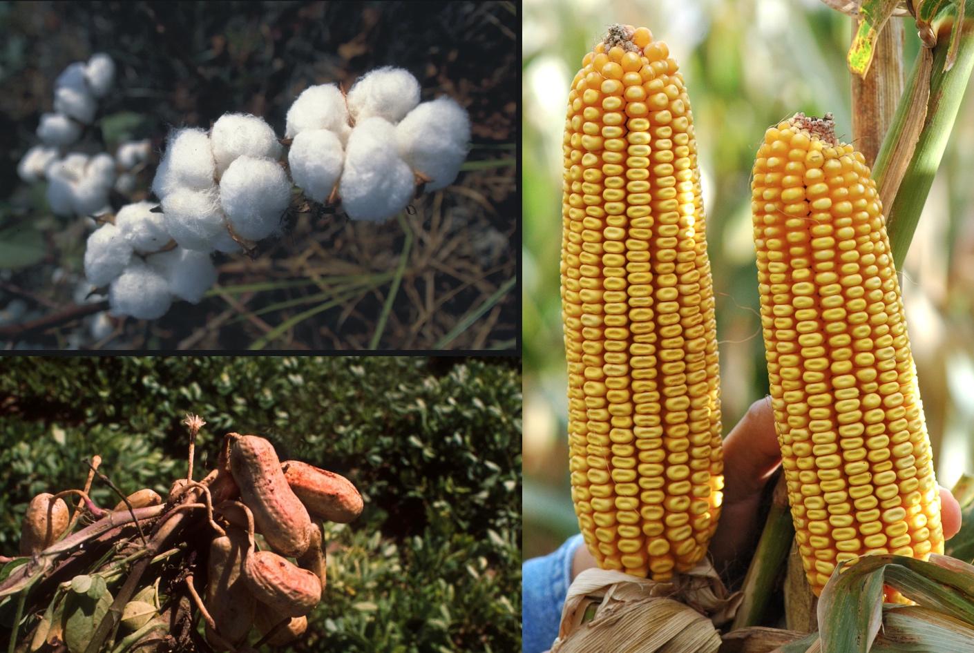 တောင်သူလယ်သမားကြီးများအတွက်နှိုးဆော်ချက် (ဇန်နဝါရီလ)