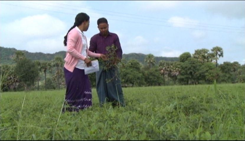 အပူပိုင်းဇုန်ဒေသ ရေရှည်တည်တံ့သော စိုက်ပျိုးရေးနည်းပညာဖွံ့ဖြိုးမှု ကြိုးပမ်းအားထုတ်မှုဇာတ်လမ်း