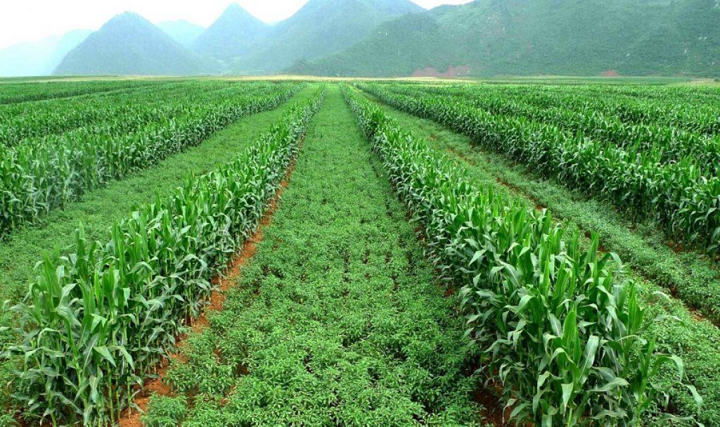 စိုက်ပျိုးမွေးမြူရေးလုပ်ငန်းကို အမျိုးအစားခွဲခြင်းအကြောင်း