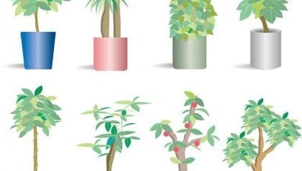 အိမ်တွင်းစိုက် သစ်ပင်လေးများ
