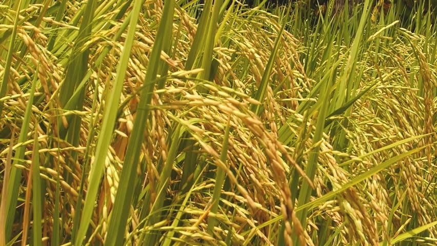 တောင်သူလယ်သမားကြီးများအတွက်နှိုးဆော်ချက်(အောက်တိုဘာလ)