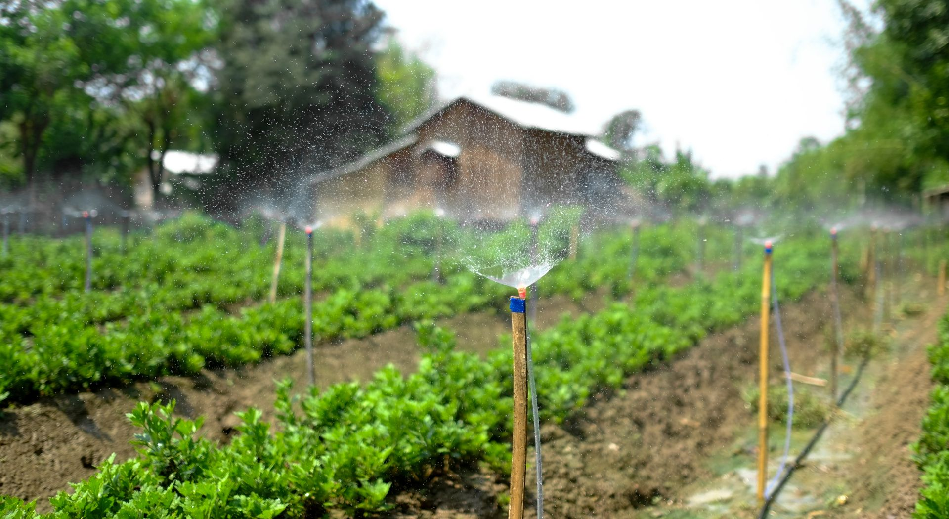 စိုက်ပျိုးရေချွေတာရေး နည်းလမ်း (၁၀)မျိုး