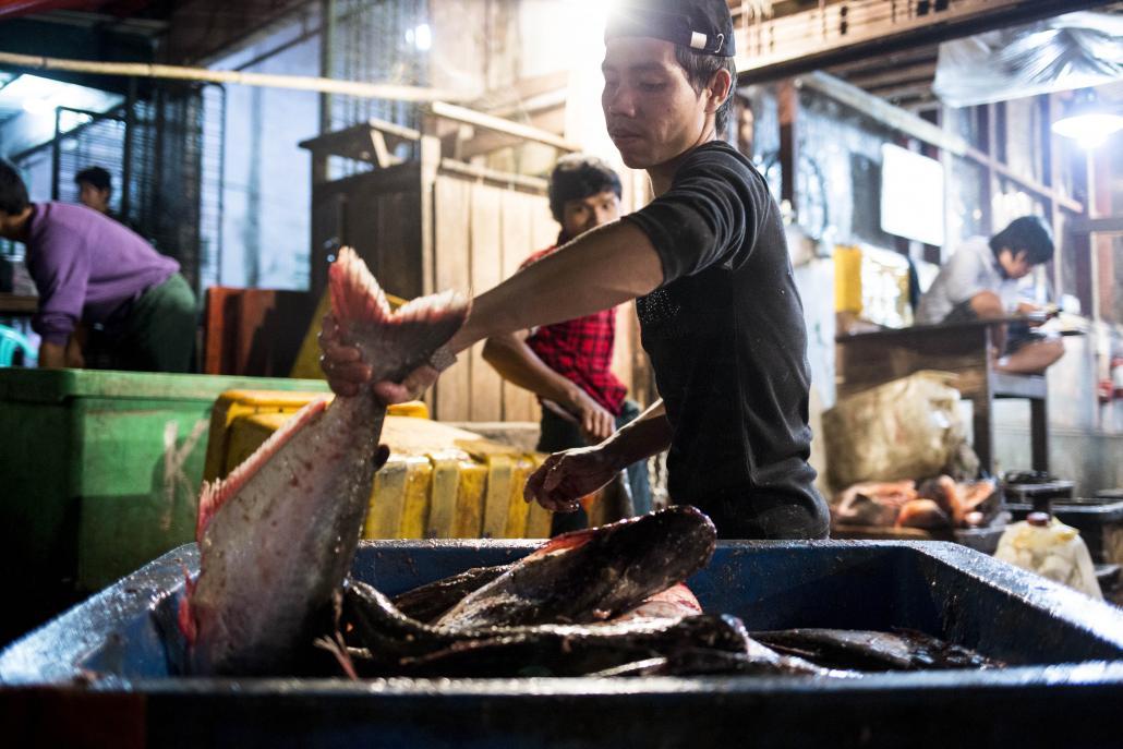 ငါးတန်မွေးမြူရေးစီမံကိန်း ပြီးစီးပါက ပြည်ပသို့တင်ပို့မှုမှ တစ်နှစ်လျှင် ကန်ဒေါ်လာ သန်း ၁၅၀ ခန့် ရရှိနိုင်မည်