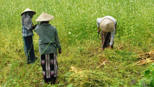 ရာသီဥတုဖောက်ပြန်မှုကို ရင်ဆိုင်အံတုခြင်း