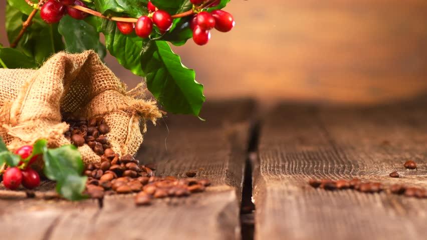 """""""(၅)  ကြိမ်မြောက် ကော်ဖီအရည်အသွေးပြိုင်ပွဲ ပြုလုပ်ကျင်းပမည်"""""""