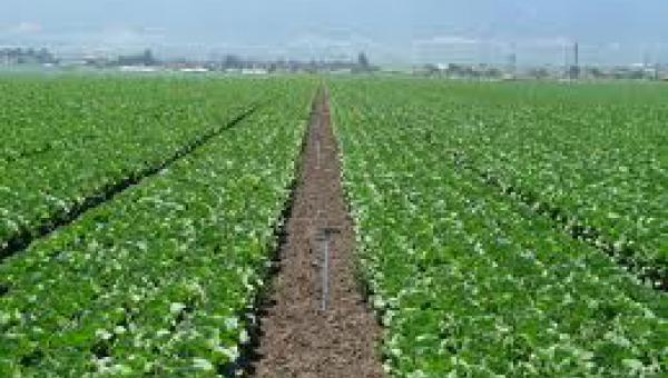 စိုက်ပျိုးရေးတွင် ကျင့်သုံးသင့်သည့် အလေ့အထကောင်းများ -၁