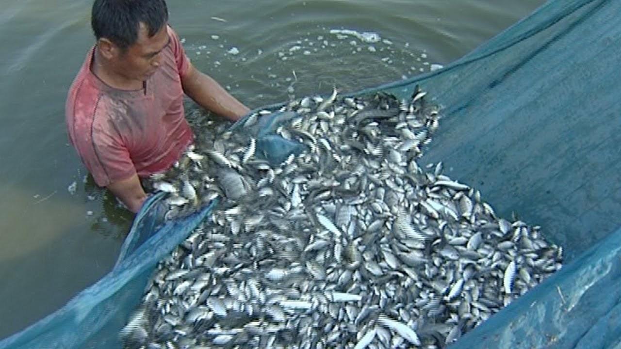 အာဟာရချို့တဲ့မှု မဖြစ်ဖို့ ငါးများများစားကြစို့