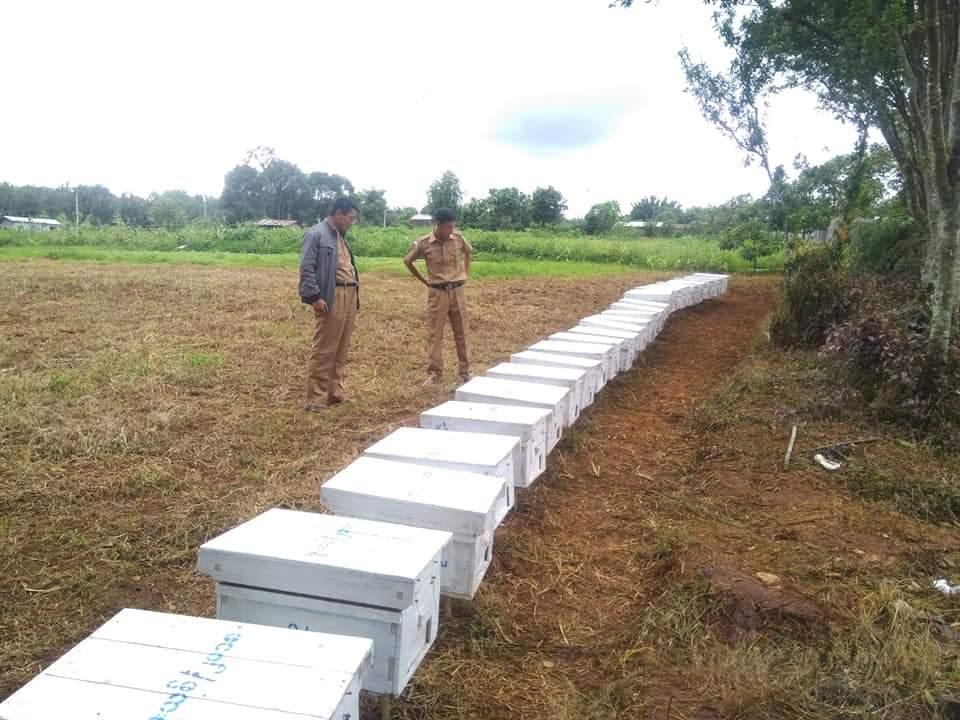 ဥရောပမှ မြန်မာ့ပျားရည် တစ်နှစ် တန်ချိန် ၈၀၀ ဝယ်ယူရန် ကမ်းလှမ်းထား