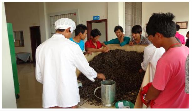 လက်ဖက်ခဲပြုလုပ်နည်း (Pressed Tea (Pu-Er-Cha) Processing)
