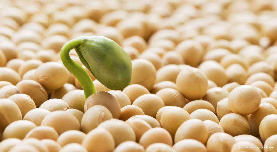 မျိုးကောင်းမျိုးသန့် စိုက်ပျိုးရေးနှင့် အပင်ပေါက်နှုန်း စမ်းသပ်ခြင်း(Germination test)