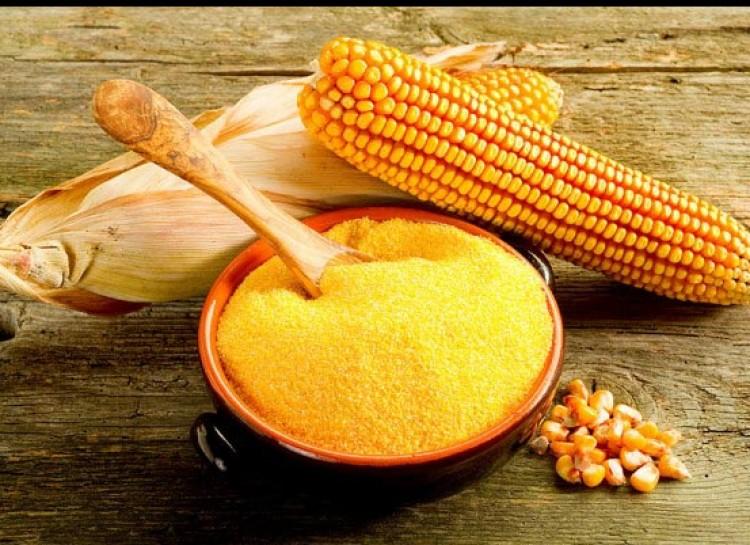 ပြောင်းဆန်မှုန့် (Corn Gluten meal)