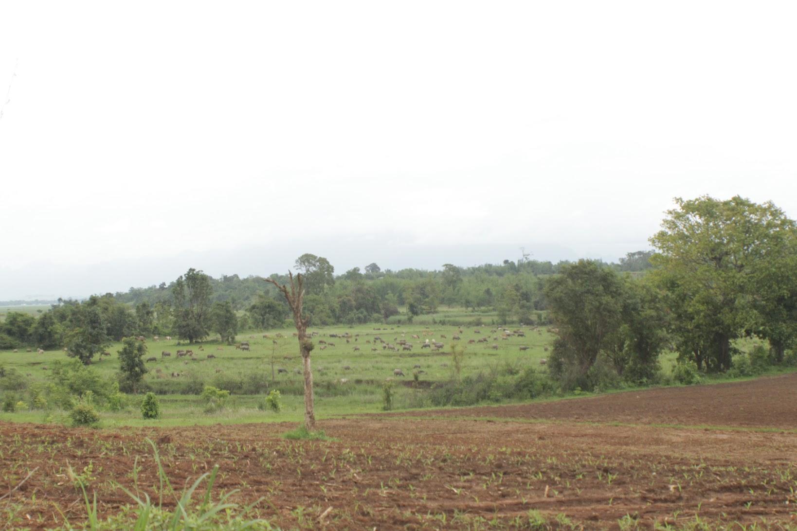 စိုက်ပျိုးမှုမရှိသည့် မြေလွတ်၊ မြေရိုင်းဧက တစ်သန်းကျော် ပြန်လည်သိမ်းယူထား