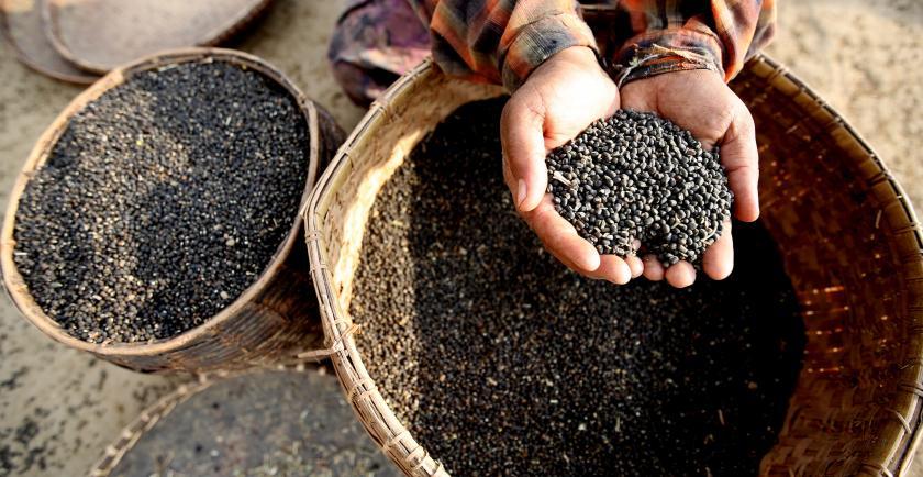အိန္ဒိယက မြန်မာမတ်ပဲ ပြန်လည်ဝယ်ယူသဖြင့် မတ်ပဲဈေးနှုန်းများ ခုန်တက်
