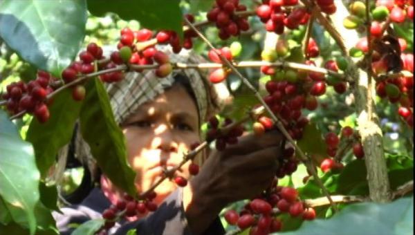 ကော်ဖီ သို့မဟုတ် ဓနုကိုယ်ပိုင်အုပ်ချုပ်ခွင့်ရဒေသ၏ အဓိက စီးပွားရေး