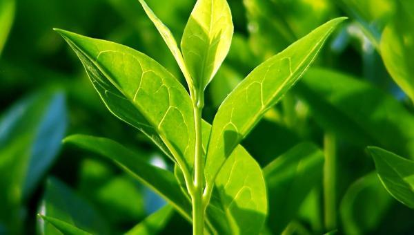 သစ်ပင်များမှ ရရှိသော အကျိုးကျေးဇူးများ (အကျိုးသက်ရောက်မှုများ)