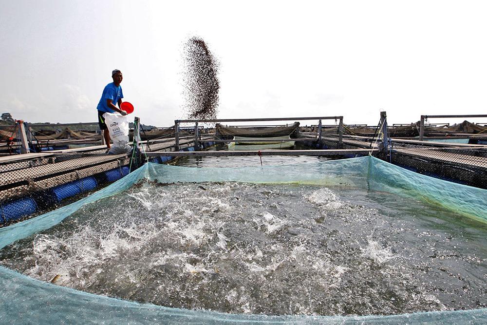 ငွေအမြန်ပေါ်မယ့် ငါးမွေးမြူရေးစနစ်အကြောင်း တစ်စေ့တစ်စောင်း