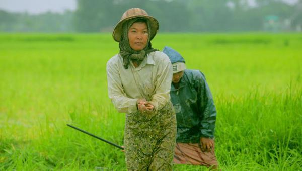 မူမမှန်တဲ့ရာသီဥတုကြောင့် မိုးစပါးစိုက်ရေးလက်တွန့်နေတဲ့ လယ်သမားများ