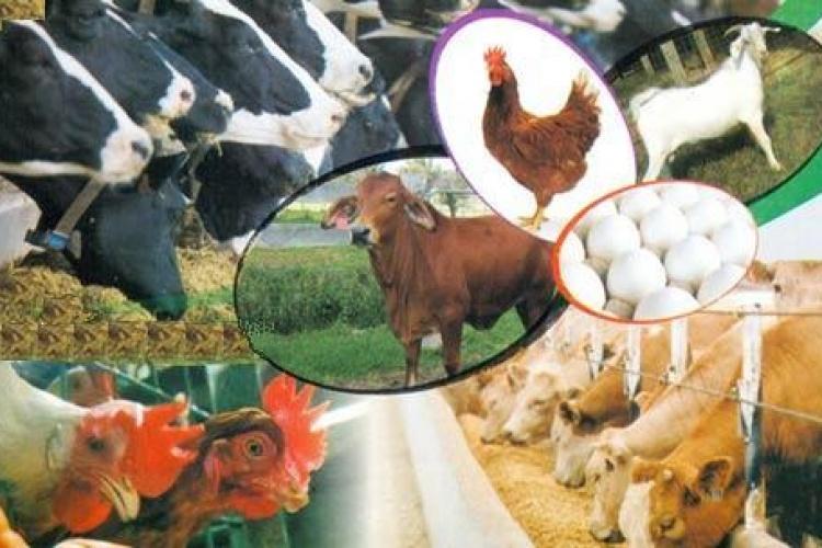 အာရှစားသောက်ကုန်နှင့် တိရစ္ဆာန် အစာပြပွဲတွင် မြန်မာပါဝင်ပြသရန် စီစဉ်