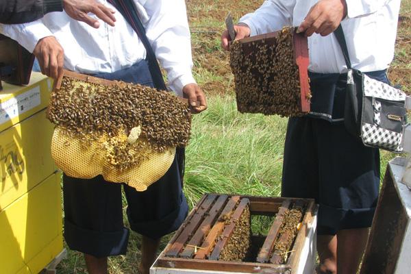အော်ဂဲနစ်လယ်ယာအတွက် ပျားမွေးမြူရေး (Beekeeping for Organic)